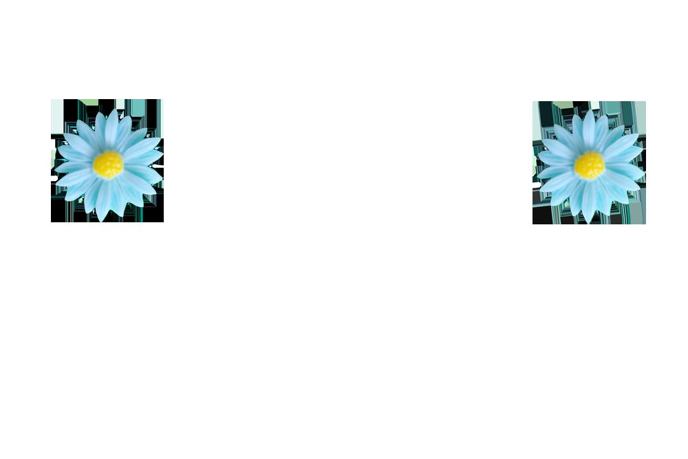 grande-marguerite-bleu-clair