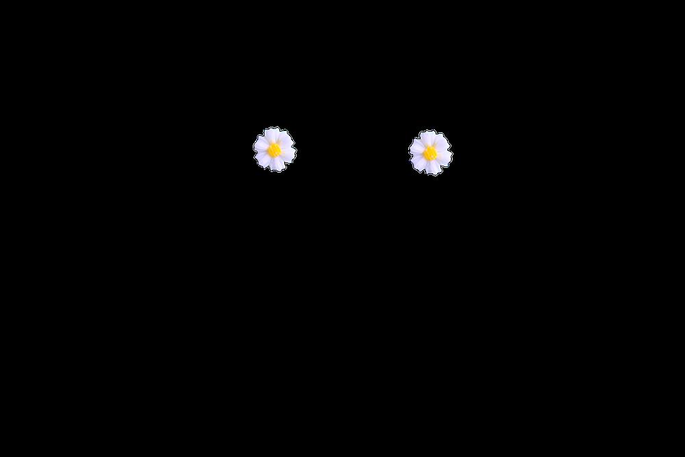 mini-paquerette
